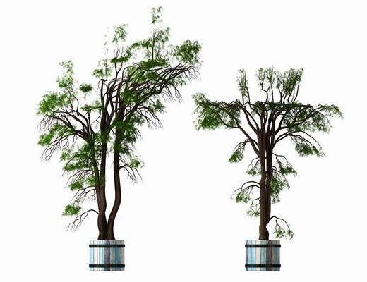 花草绿植, 树木, 盆栽, 现代