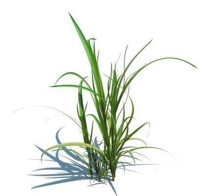 植物, 花草