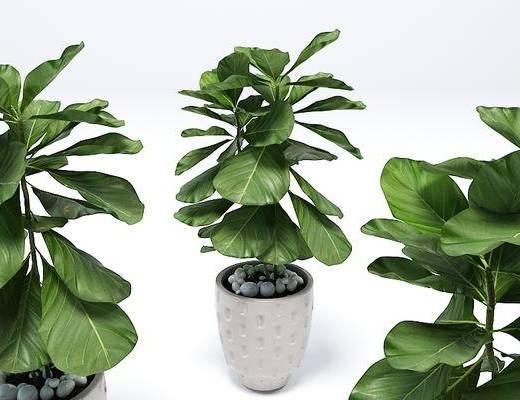 植物, 盆栽, 现代盆栽, 绿植, 现代
