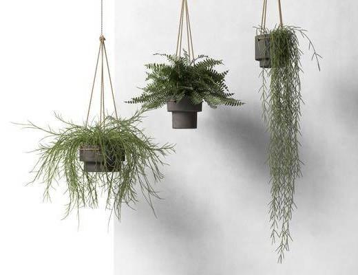 吊篮绿植, 盆栽, 绿植植物, 现代
