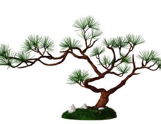 摆设, 盆栽, 树枝, 现代