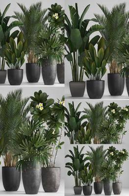 植物盆栽, 盆栽组合, 绿植植物, 现代
