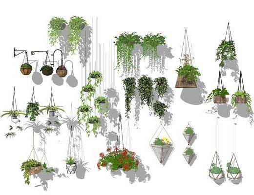 花草, 植物, 盆栽组合