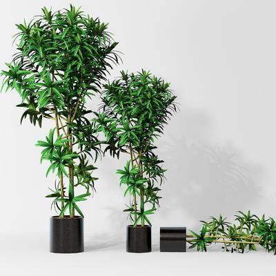 植物, 盆栽, 树木