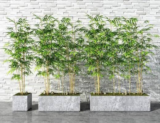 现代, 竹子, 盆景, 组合