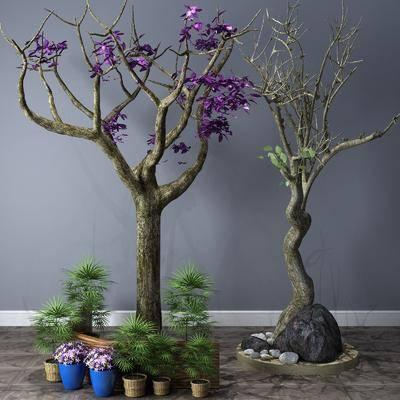 植物, 樹木