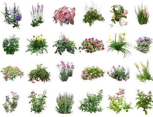 地被植物, 花草, 植物组合