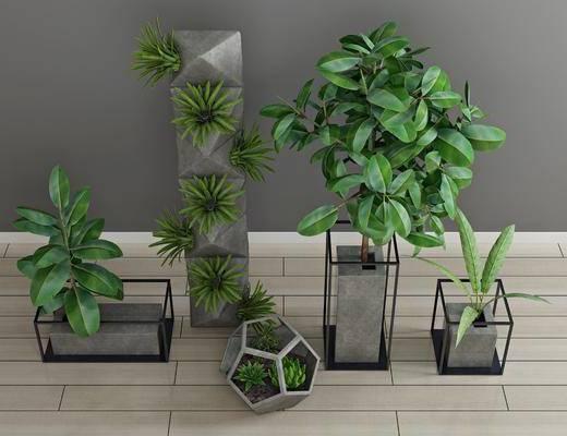 绿植盆栽, 绿植植物, 盆栽组合, 现代