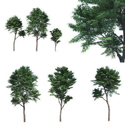 景观树组合, 树木, 绿植植物, 现代