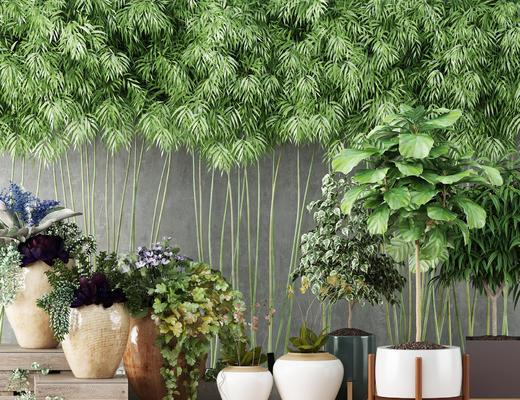 现代, 竹子, 植物, 盆栽
