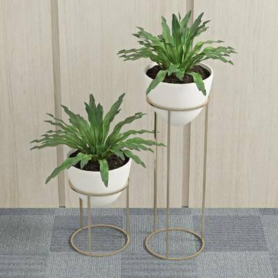 绿植盆栽, 植物, 装饰架, 现代