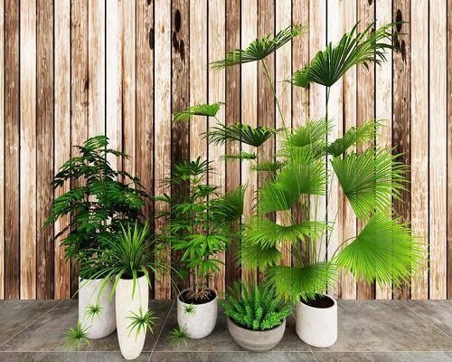 盆栽, 绿植, 现代