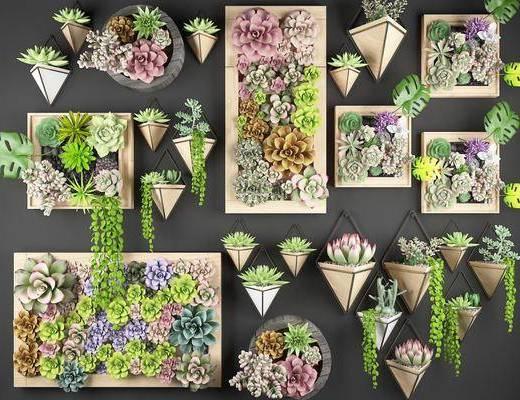 植物墙, 画框, 墙饰, 植物, 花卉