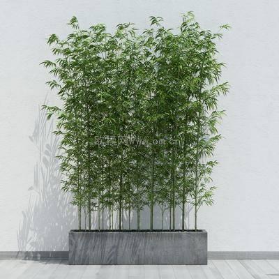 竹子, 现代, 现代竹子