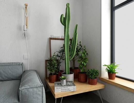 植物组合, 盆栽, 绿植植物, 壁灯, 北欧