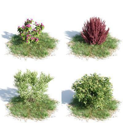 植物, 花卉, 灌木, 现代