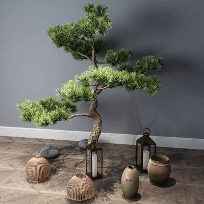 樹木, 植物