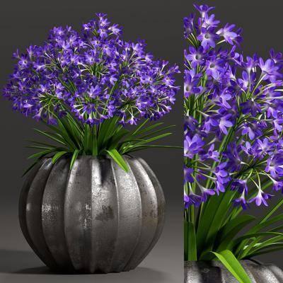 花瓶, 植物, 花卉, 现代