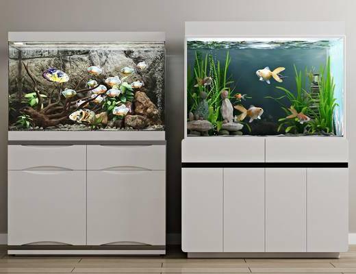 生態魚缸, 水族箱, 現代