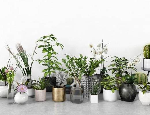 北欧简约, 植物盆栽, 植物组合, 北欧