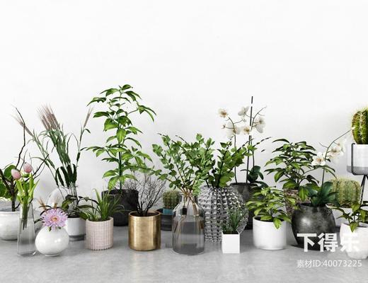 北欧简约, 植物盆栽, 植物组合