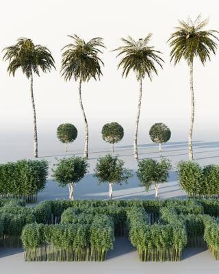 现代, 绿植, 植物, 灌木, 树木, 热带树木