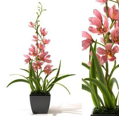花卉, 盆栽, 植物, 现代