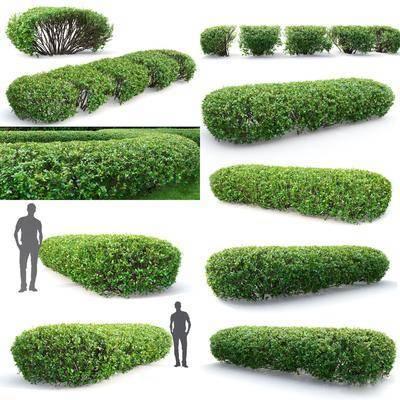 灌木丛, 现代