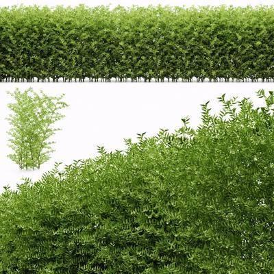 灌木绿篱, 现代