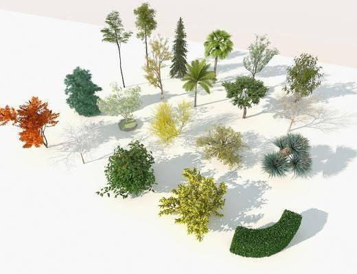 樹木組合, 植物