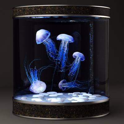 鱼缸水族, 水母, 鱼缸, 现代