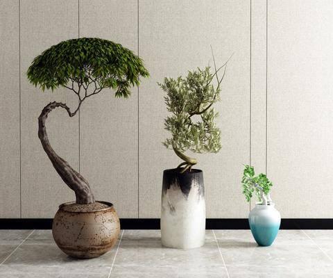 盆栽, 植物, 花草, 花瓶