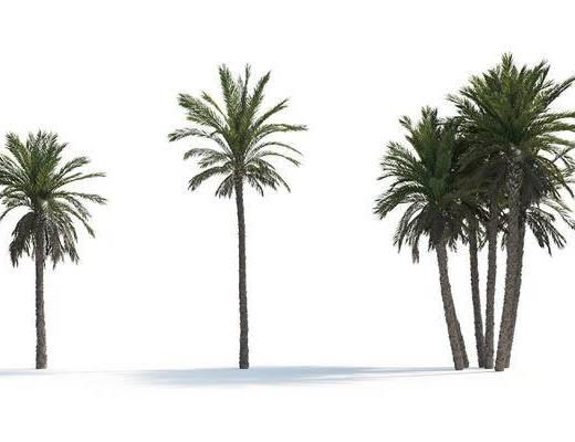 椰子树, 景观树, 植物, 树木