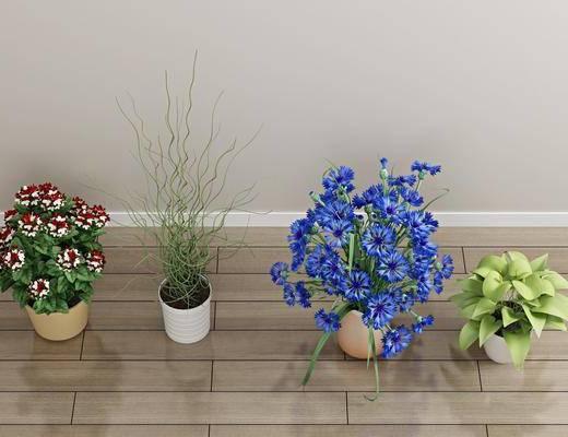 花瓶花卉, 盆栽, 绿植植物, 现代