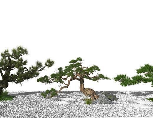树木, 植物, 盆景