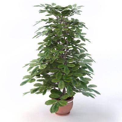 盆栽, 植物, 现代, 绿植