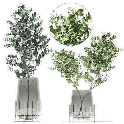 植物, 盆栽, 花瓶