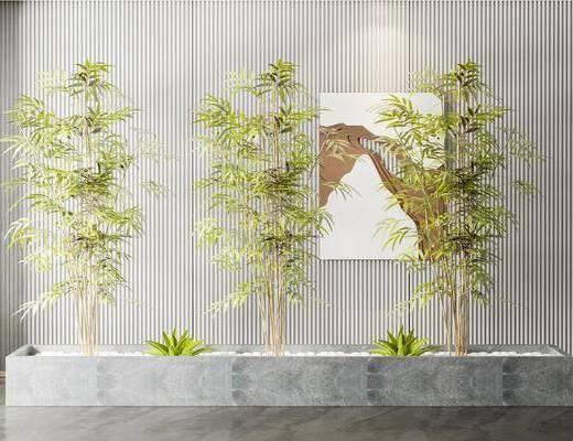 竹子, 绿植, 盆栽, 组合