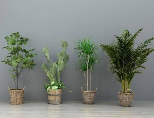 绿植盆栽, 盆景组合, 绿植植物, 现代