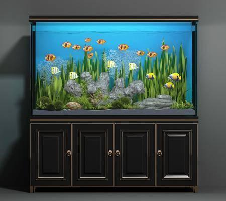 鱼缸, 水族, 现代