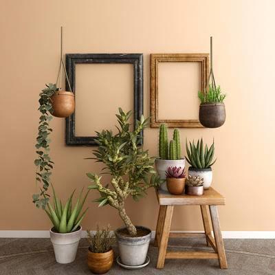 盆景, 植物, 画框, 北欧, 多肉, 仙人掌