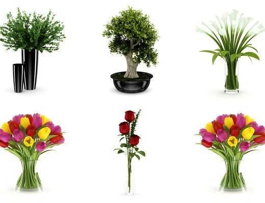 花瓶, 花卉, 植物, 树木, 现代