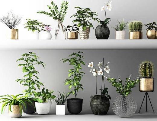盆栽, 花草, 盆景组合, 植物