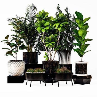植物, 盆栽, 花草