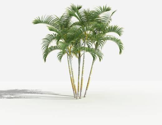 灌木, 树木, 植物, 花草, 景观植物园林, 小区植物