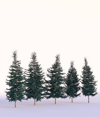 叶松, 树木, 现代