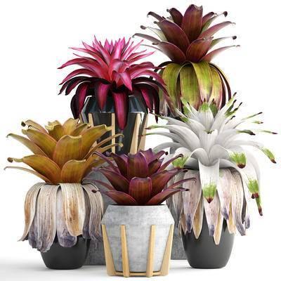 植物, 盆栽, 花盆, 现代, 绿植