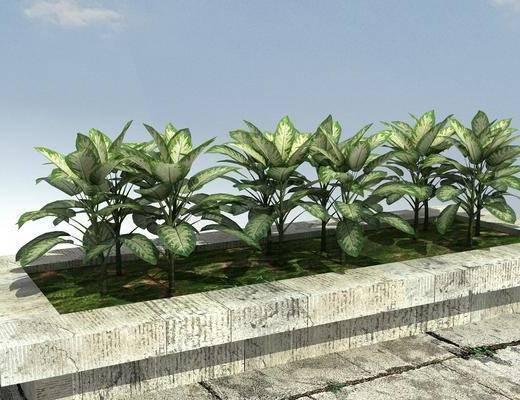 景观, 植物, 组合