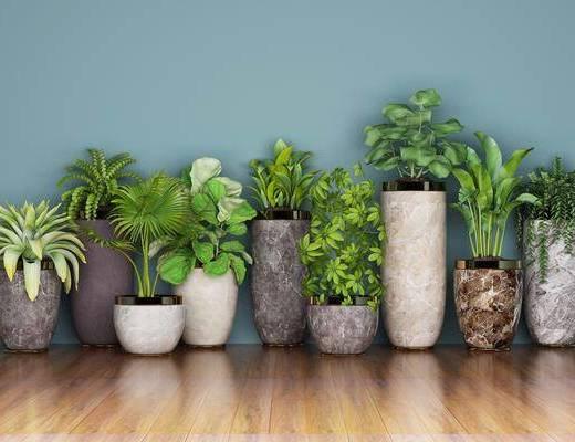 绿植盆栽, 现代
