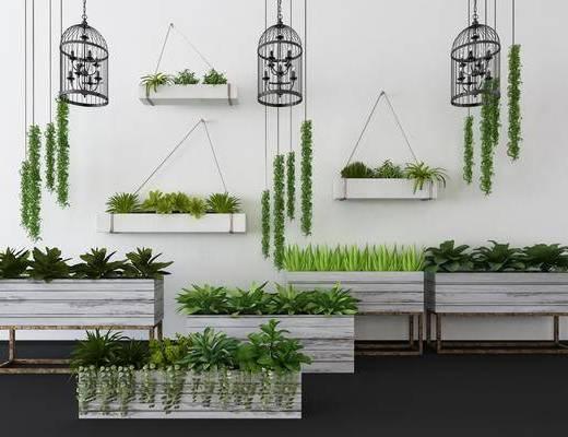 植物盆栽, 吊灯, 绿植植物, 现代